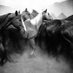 Adam Jahiel: Remuda, Spanish Ranch, 1995
