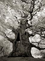 Beth Moon: Majesty