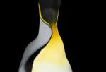Brad Wilson: King Penguin #4, 2019