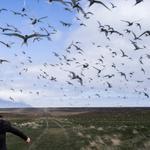 Cig Harvey: The Judgement of Terns, 2016
