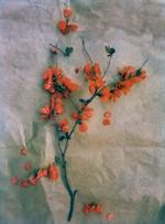 Diana Bloomfield: Quince, 2018