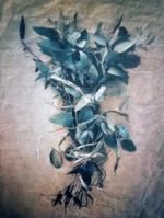 Diana Bloomfield: Bound Eucalyptus, 2018