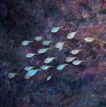 Hiroshi Watanabe: TDTDC 73 (School of Fish), 2012