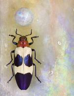 Jo Whaley: <i>Chrysochroa bugueti rugicollio</i>