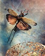 Jo Whaley: Orthoptera: <i>Acrididae</i>