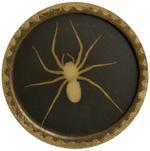 Kate Breakey: Brown Fiddle Spider