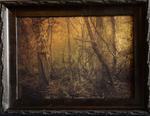 Kate Breakey: Swamp, Virginia Creeper, Plum Creek, Tx
