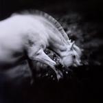 Keith Carter: Norwegian Pony #2