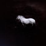 Keith Carter: Norwegian Pony #1