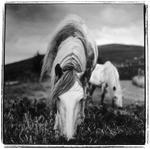 Keith Carter: Skye Ponies, 1998