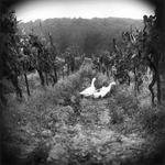 Keith Carter: Vineyard, 2000