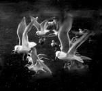 Krista Elrick: Untitled, 2003