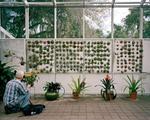 Kyle Ford: Fairchild Tropical Botanic Garden, Miami, FL, 2009