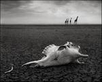Nick Brandt: Giraffe Skull, Amboseli 2010