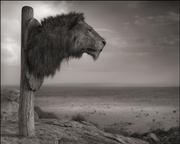 Nick Brandt: Across the Ravaged Land: Part 2 (September 2013 Release)