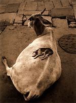 Pentti Sammallahti: Varanasi , India, 1999