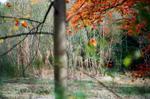 Terri Weifenbach: Woods 27, 2010