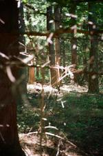 Terri Weifenbach: Woods 28, 2010