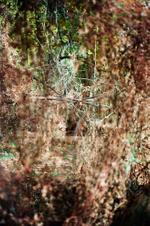Terri Weifenbach: Woods II 31, 2010