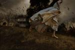 Tom Chambers: Winged Migration, 2009