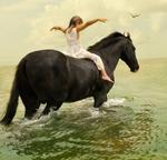 Tom Chambers: Marwari Stallion #1
