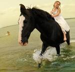 Tom Chambers: Marwari Stallion #2